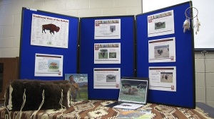 Buffalo Educational Display, Ioway Tribe of Oklahoma
